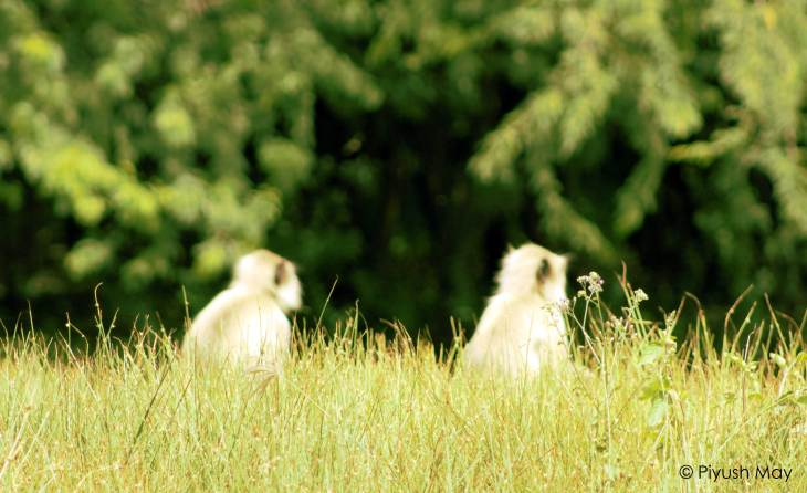 16-lonar-crater-wildlife